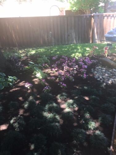 n dallas backyard7
